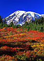 Rainier Autumn